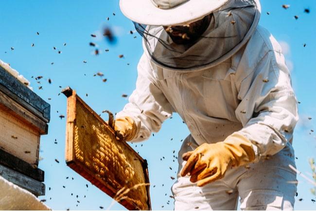 Biodlare som arbetar med att samla honung